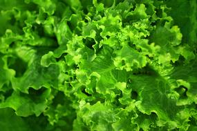 wallpaper with green salad