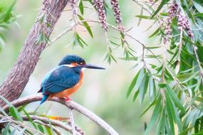 Kingfisher blue Bird