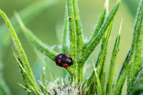 black and red ladybug on green grass