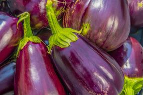 Eggplant, raw vegetables in pile close up