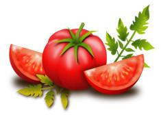 tomato fruits vegetables drawing