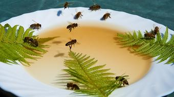 Bees Honey plate