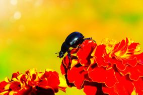 Forest Beetle black red flowers