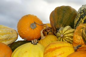orange Pumpkins Squash Vegetables
