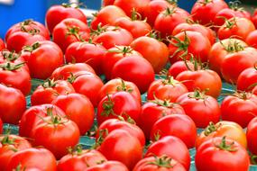 Fresh Harvested Tomatoes red