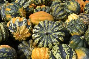 Pumpkin Gourd Autumn orange green
