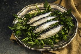 Sardines Fish Lunch and herb