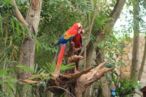 Parrot Scarlet Macaw red blue