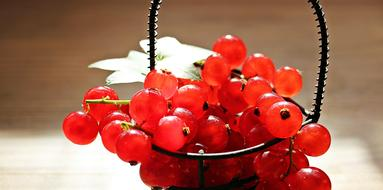 Currants Fruit Red