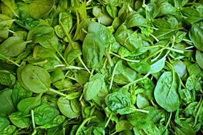 Spinach Vegetable Fresh green