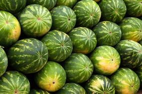 Watermelon Background green