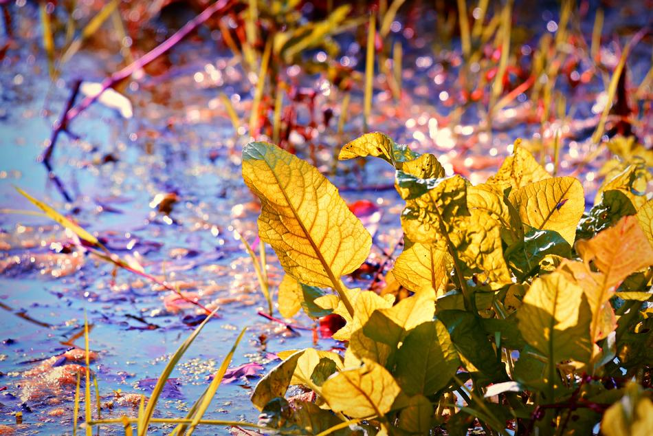 Marsh water with the colorful plants