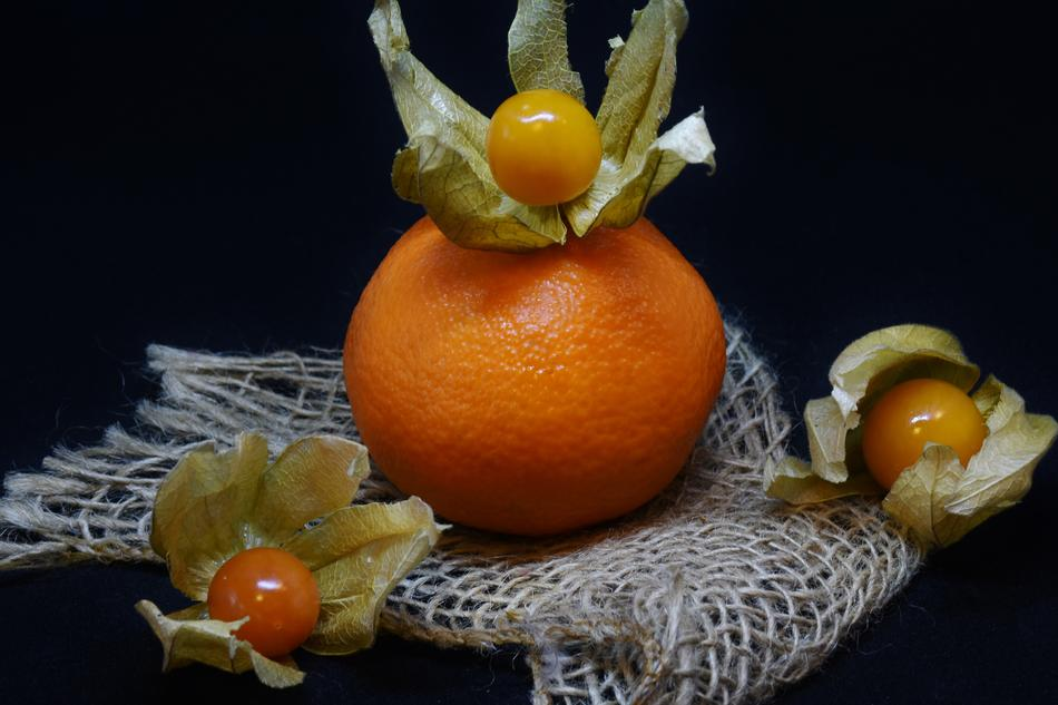 Orange Physalis