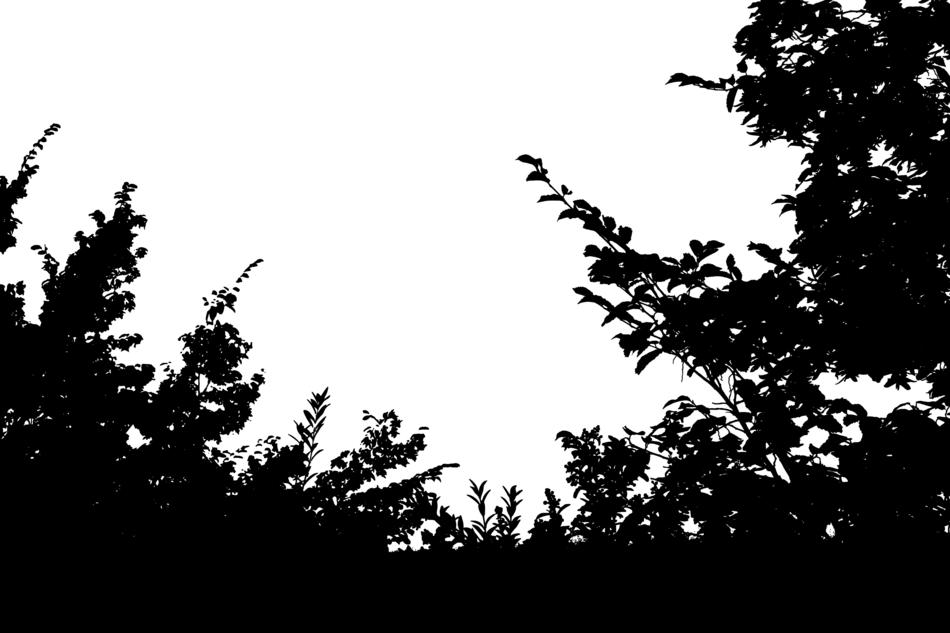 tree silhouette on the white background