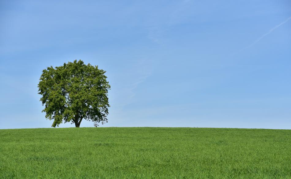 one Tree on Meadow