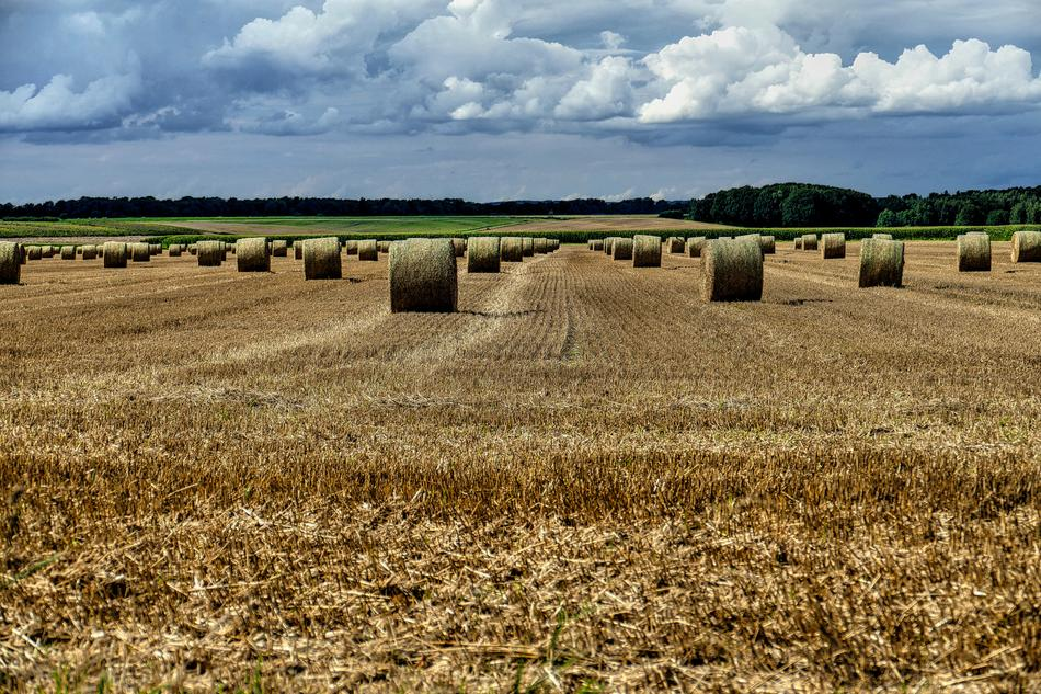 Straw Bales Field and sky