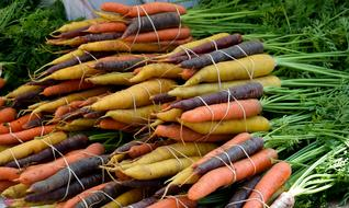 Vegetable Food Carrot yellow orange purple