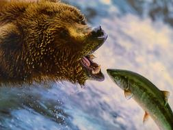 Grizzly Bear and fish green
