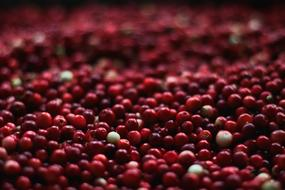 pile of ripe Cranberries Close Up, background