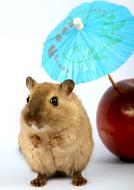 photo of a hamster under a paper cocktail umbrella