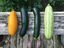 harvest zucchini on a wooden bench