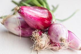 Onion Tropea Raw red