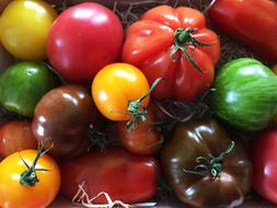 Tomatoes Vegetables Food colors