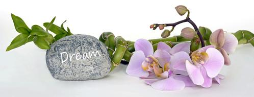 Orchid Flower Bamboo Luck and stone dream