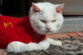 White Cat Animalin red