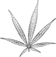 leaf of cannabis, black and white drawing