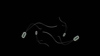 drawn white bacteria on a black background