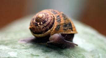 small Snail Shell