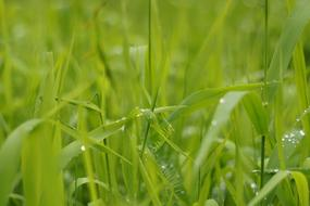 raindrops on green lush grass