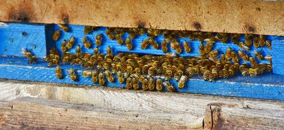 flock of bees on a blue hive