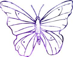 purple butterfly sketch on a white background