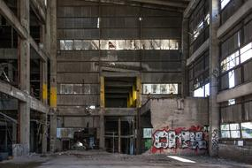 abandoned plant in graffiti