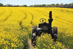 Field Of Rapeseeds and Tractors Age
