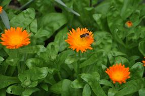 Flower Bee Green orange