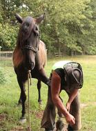 Farrier Horse and man