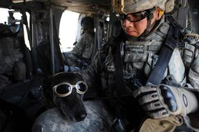 Dog Goggles Military and man