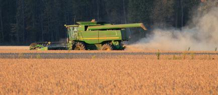 The Harvest Of Soybeans