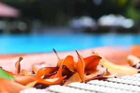 Swimming Pool and red Leaves