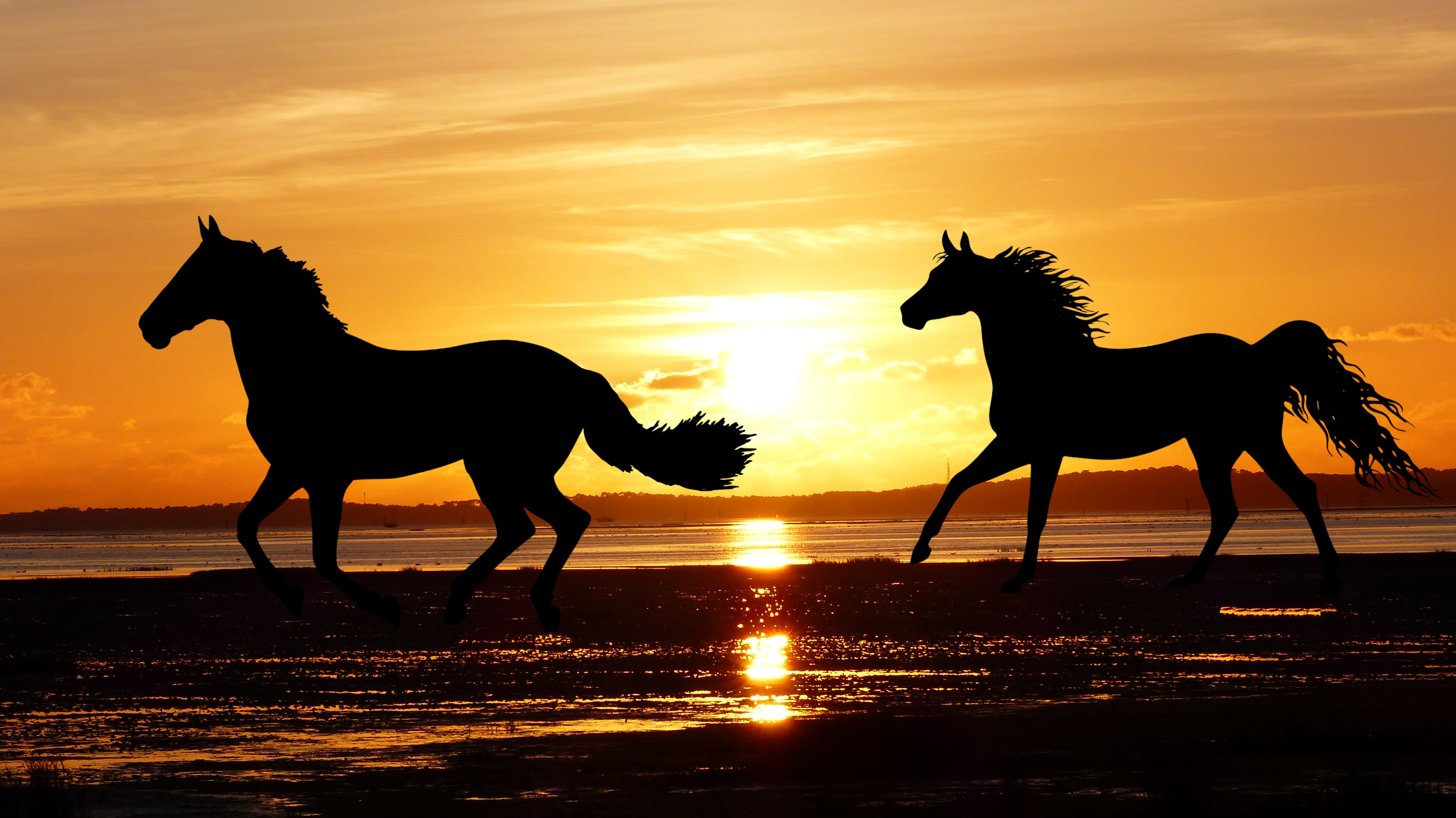 Two Running Horses On The Beach At Sunset Free Image