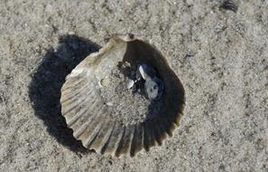 sand in grey Seashell on Beach
