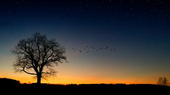lonely Tree and flock of Birds at Evening Sky