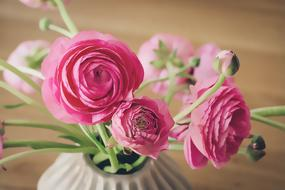 Ranunculuses, pink buttercup Flowers in Vase