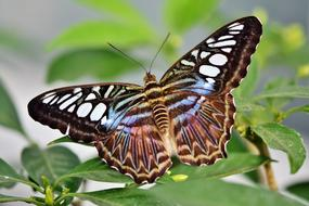 macro photo of a tropical butterfly on a green plant