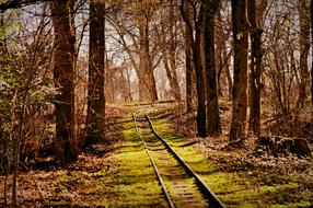 abandoned Railroad Tracks in forest