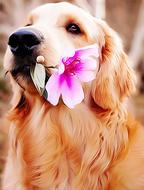 labrador dog with flower in mouth