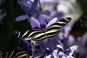 gorgeous Butterfly Insect